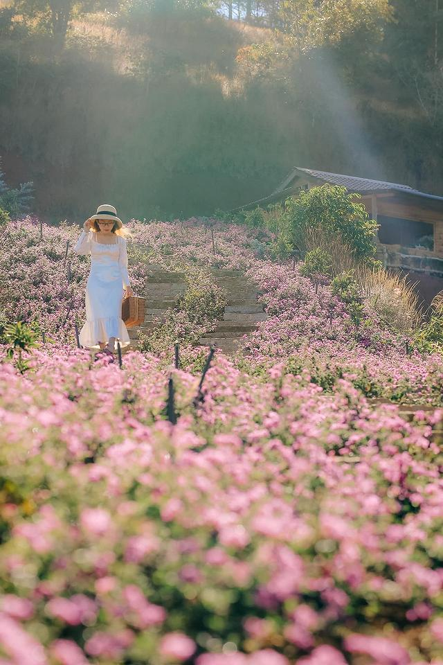 xuất hieôn cánh dồng hoa lavender tím ngắt lớn nhất dà laot, sống ảo bao xuất sắc - anh 11