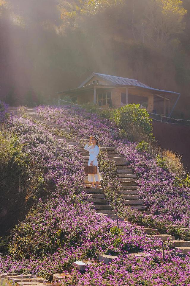 xuất hieôn cánh dồng hoa lavender tím ngắt lớn nhất dà laot, sống ảo bao xuất sắc - anh 1