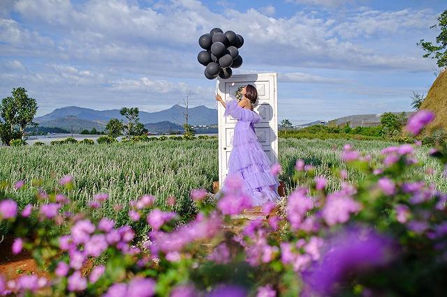 xuất hieôn cánh dồng hoa lavender tím ngắt lớn nhất dà laot, sống ảo bao xuất sắc - anh 20