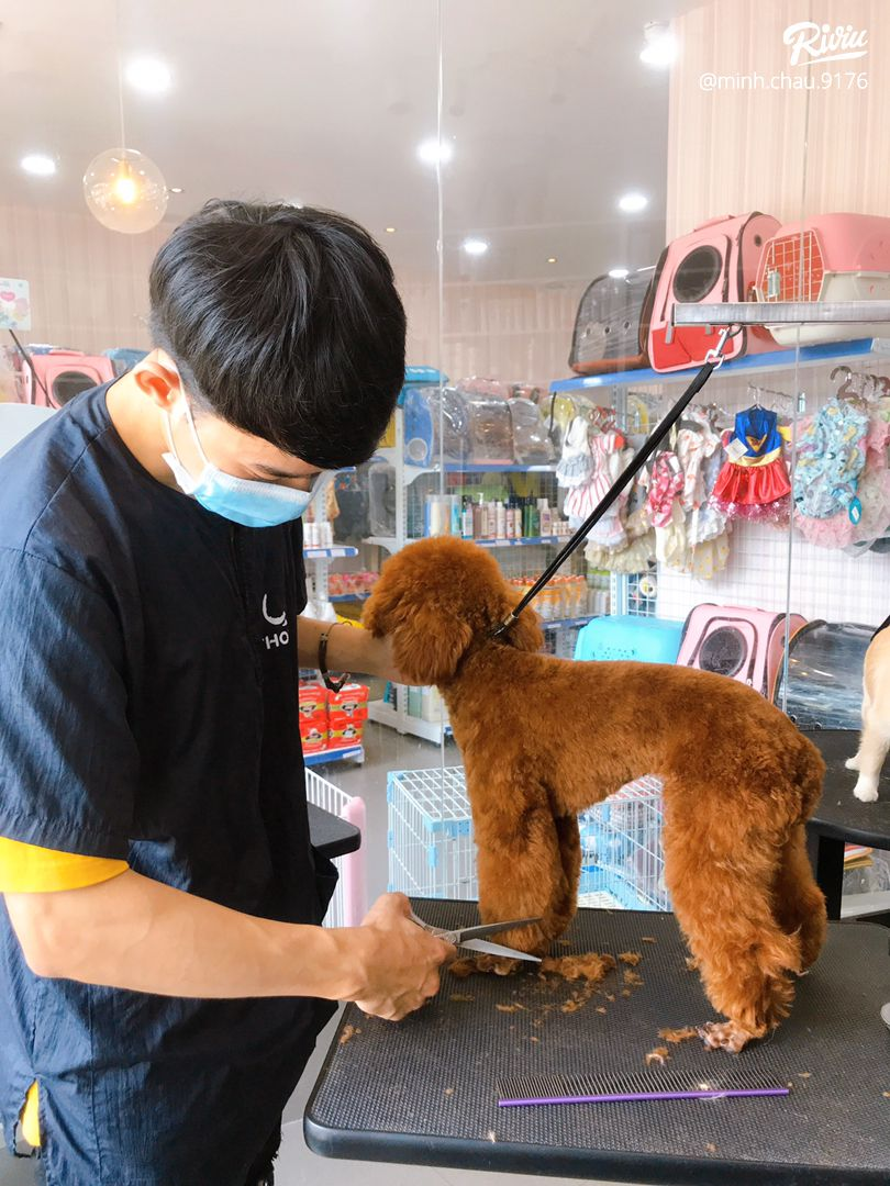 poodle house coffee - dich thi la thien duong cho may dua ghien boss giong tuiiiii - anh 2