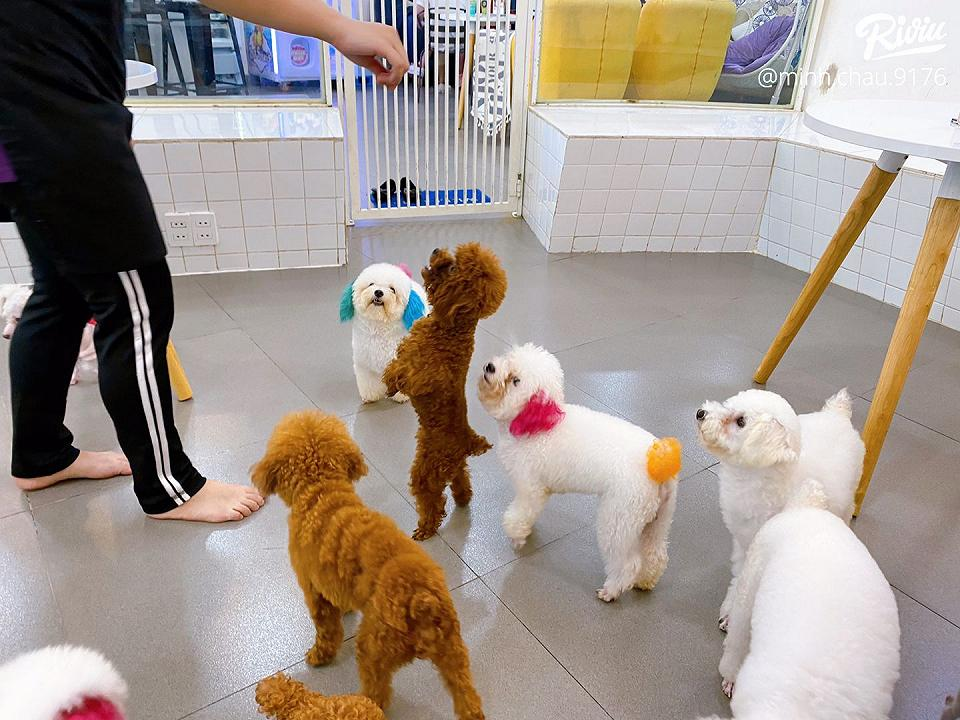 poodle house coffee - dich thi la thien duong cho may dua ghien boss giong tuiiiii - anh 5