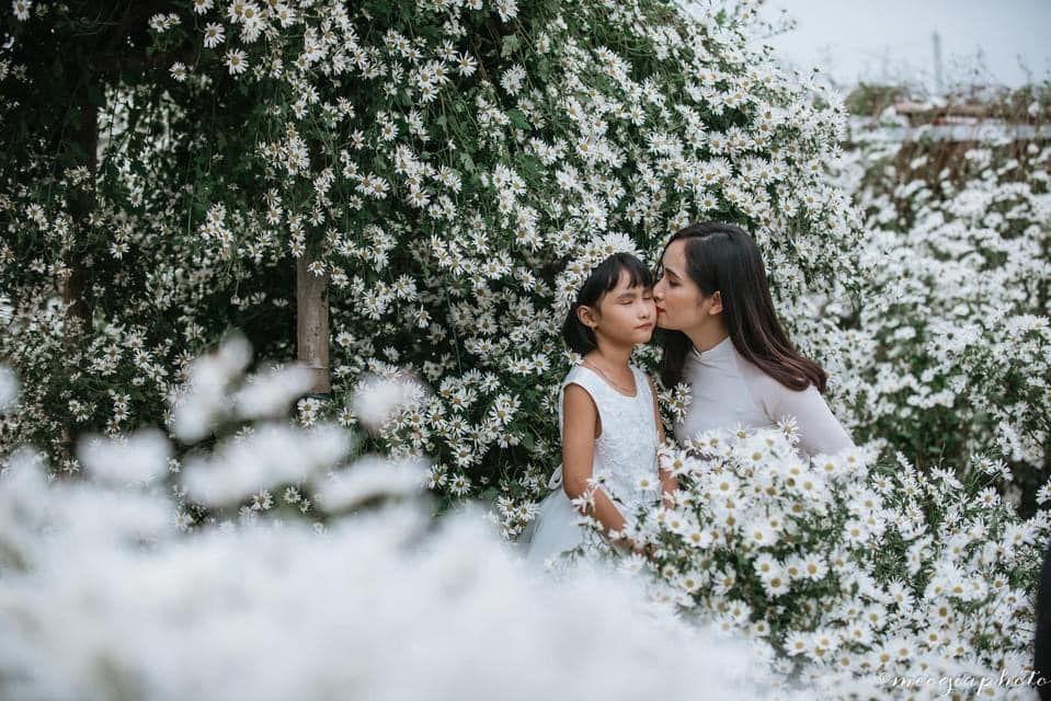 """dep toi """"hon xieu phach lac"""" vuon cuc hoa mi trangtinh khoi it nguoi biet o ha noi - anh 31"""