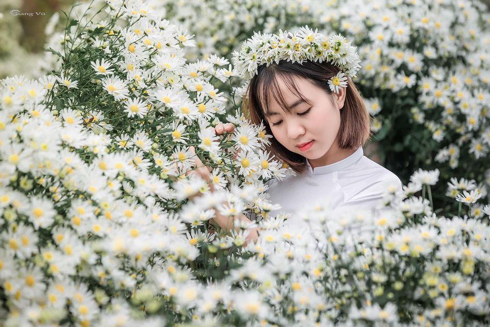 """dep toi """"hon xieu phach lac"""" vuon cuc hoa mi trangtinh khoi it nguoi biet o ha noi - anh 6"""