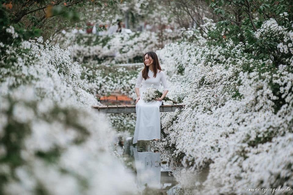 """dep toi """"hon xieu phach lac"""" vuon cuc hoa mi trangtinh khoi it nguoi biet o ha noi - anh 22"""